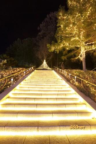 森林公園 ライトアップ&イルミネーション